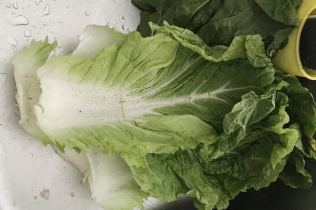 【捨てるのはもったいない】白菜の外葉の活用法