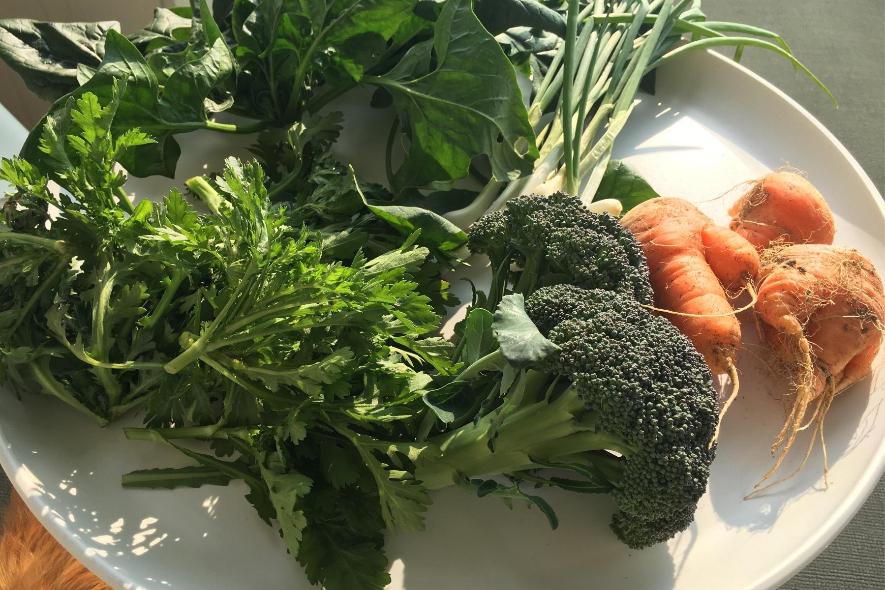家庭菜園の野菜たち